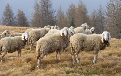 i formaggi del  pastore